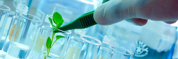 Saiba o que é biotecnologia e como ela pode beneficiar nossas vidas