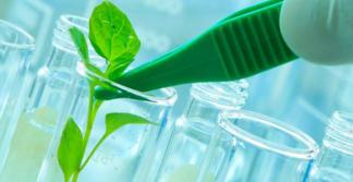 Foto de Mas afinal, o que é biotecnologia?